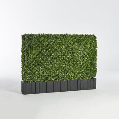 wide hedge